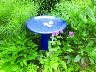 blue birdbath in brush