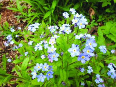 small blue photos