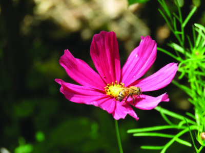 pink flower with bee on it