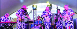 band dressed in cow suits play on stage