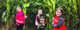 3 young girls standing in rows of corn