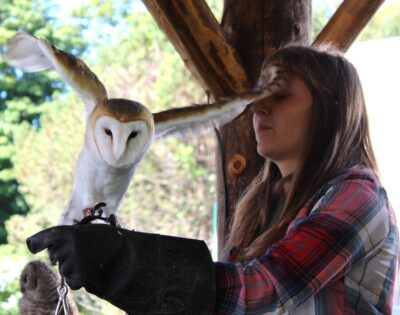 woman wearing thick glove for barn owl to perch on